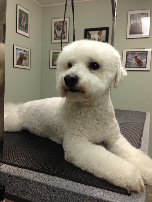 Professional Dog Grooming Servives Country Club For Pets